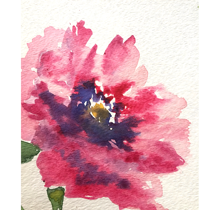 Pink watercolor flower for greeting cards